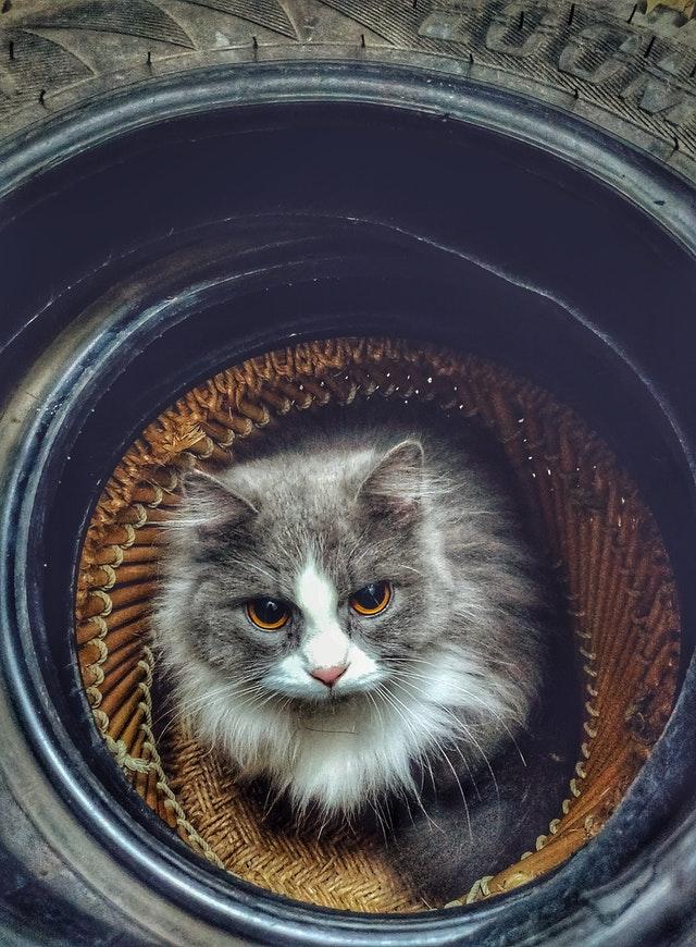 タイヤの中の猫